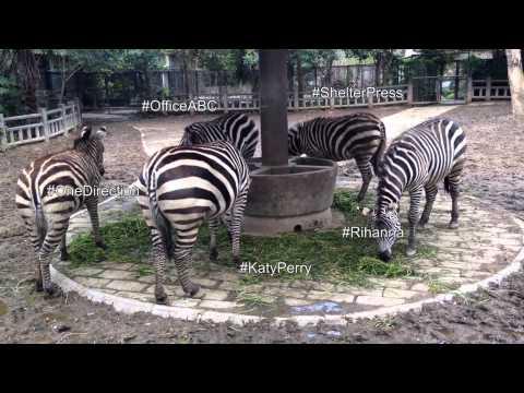 Me at Shanghai Zoo / Marine G