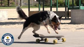 Fastest skateboarding dog  Guinness World Records