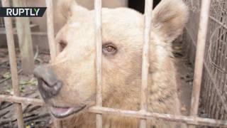 مشاهد مؤلمة في حديقة الحيوان في الموصل