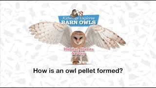 How is an owl pellet formed?