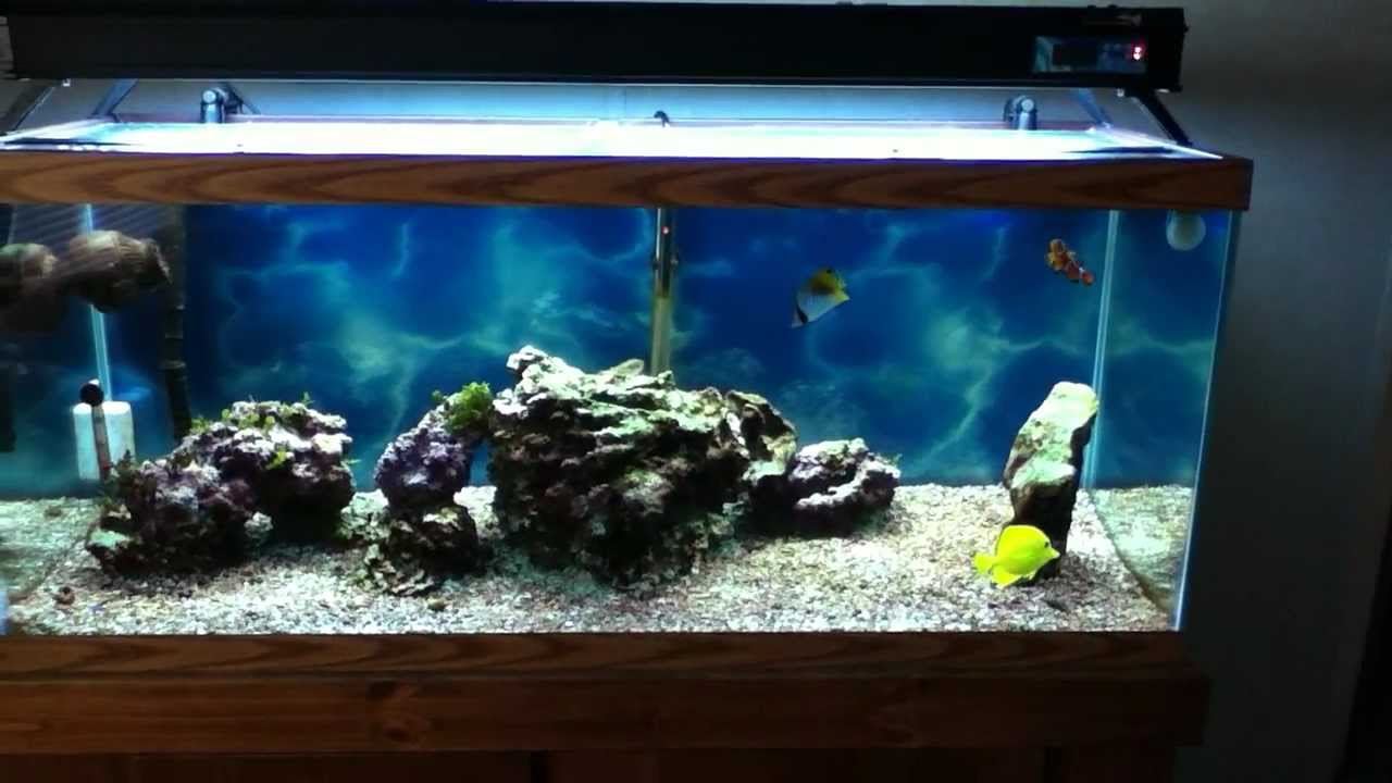 My 75 gallon fish only marine tank youtube for Youtube fish tank
