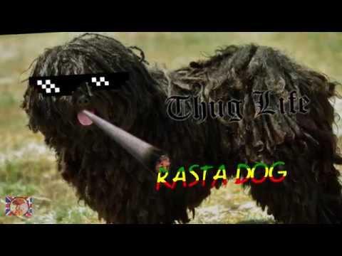 Rasta Rasta Dog
