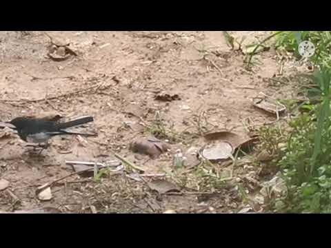 ##แอบถ่ายนก##อาหารนก