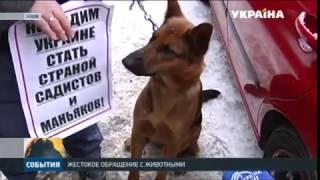 В Харькове бультерьер разорвал маленького котенка