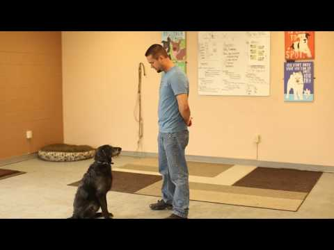 TYD60 Moment- How to Teach a Dog To Focus