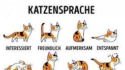 5 Wege, dich mit deiner Katze anzufreunden