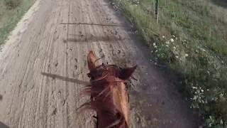ON TESTE LA PUISSANCE DU QUARTER HORSE (Et ça dépote !) + fails