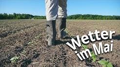 Wetter im Mai 2020: Wie 2018? Neues Dürre-Drama droht