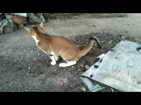 Me, My Pet Cat and Funny Narrating (In Nepali)