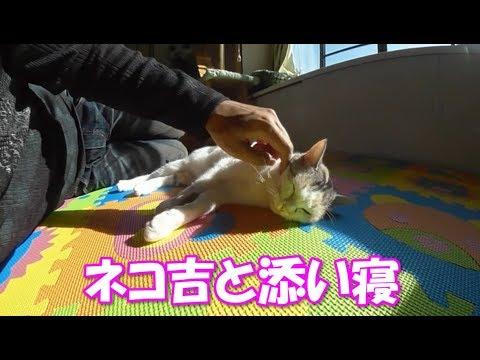 まったり中の猫に添い寝【ネコ吉LIFE】Cute Cat Videos part33
