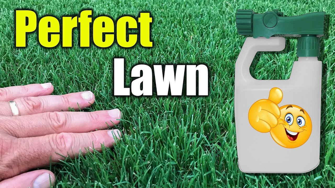 How to get thick green lush lawn quickly.
