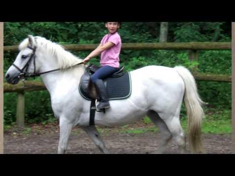 Meine Reiterliche Geschichte -von Der Reitschule Zum Eigenen Pferd