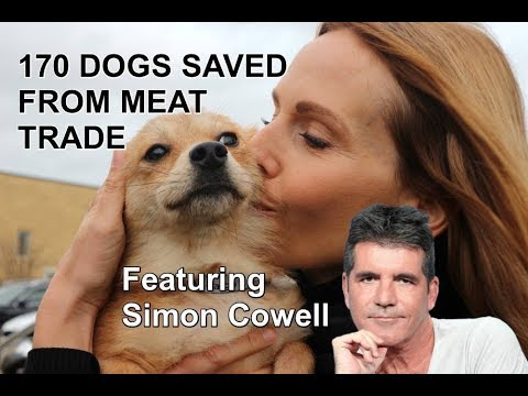 DOG MEAT TRADE RESCUE / Featuring Simon Cowell & Pete Wicks