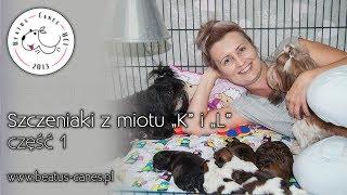 """Szczeniaki z miotu """"K"""" i """"L"""" :)"""