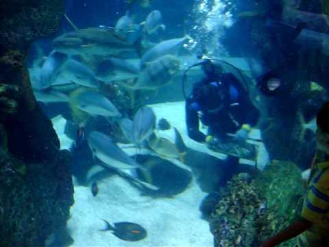 Aquarium Nashville