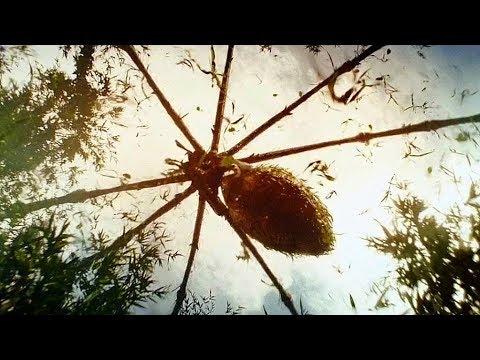 Giant Spider Attack Scene - Kong: Skull Island (2017) Movie Clip HD