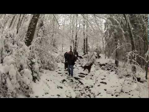 Belgian Gordon Setter Club Walk In The Ardennes - December 2012