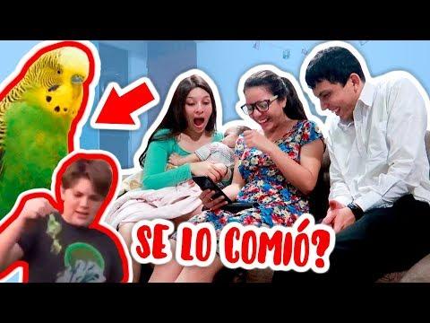 REACCIONANDO A ADIÓS CHIMUELO: VIDEO VIRAL🤣 | Barbaris