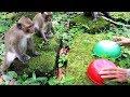 Monkey smart - Teenage monkey, baby monkey, mother monkey, watermelon, carrot - Funny monkey playing