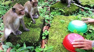 Monkey smart - Teenage monkey, baby monkey, mother monkey, watermelon, carrot - Funny monkey playing