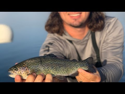 Trout Fishing In Missouri {Catch Clean Cook} Ultra Clear Water