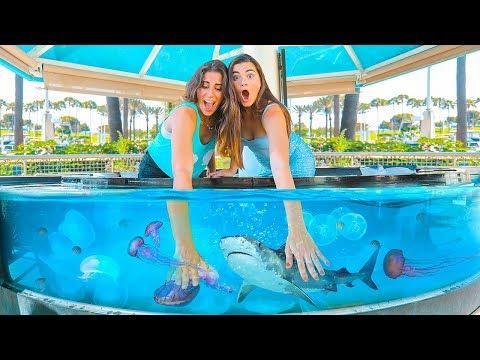 What's In The Aquarium Tank Challenge (Sharks, Stingray, Jellyfish)