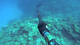 Spearfishing Australia- The reefs off Mission Beach