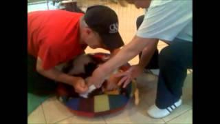 Birth Of A Puppy