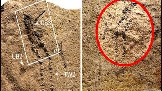 Scientists In China Have Discovered A 541 Million Year Old Footprint