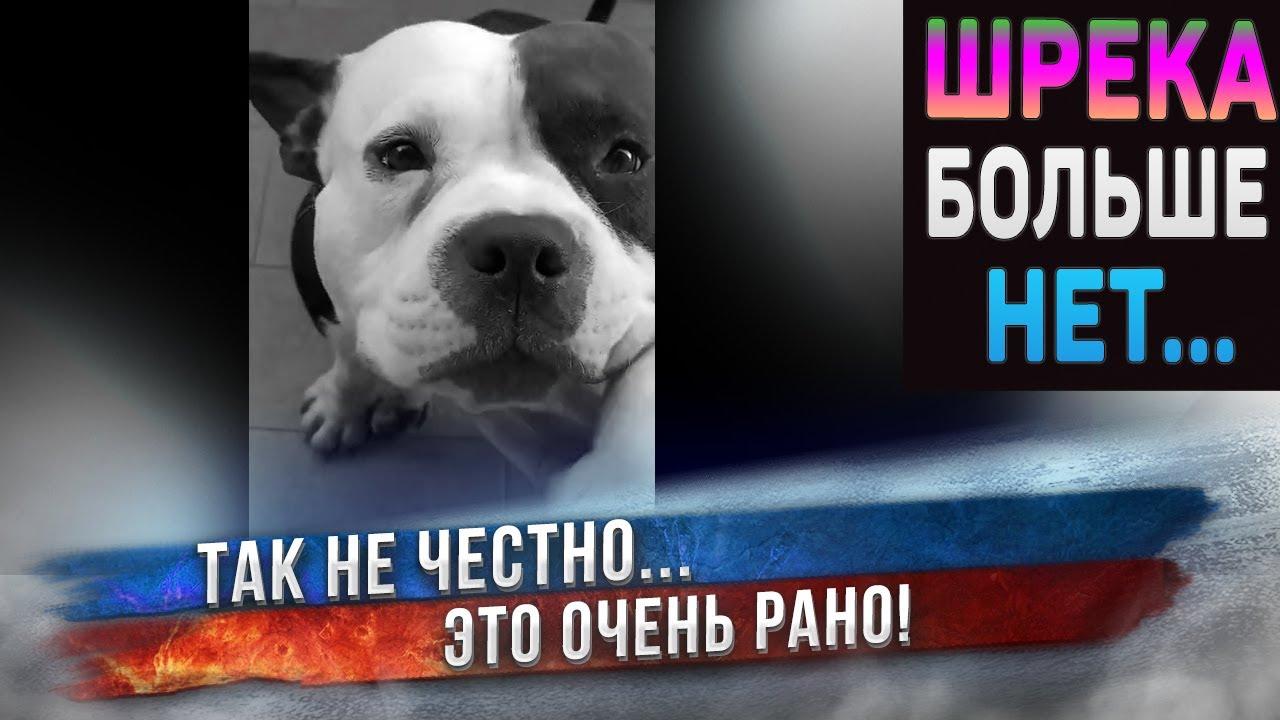 В память о Шреки. Один год жизни самой счастливой собаки. Только один год... 😭 - скачать с YouTube бесплатно