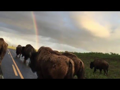 Yellowstone 2015  Fishing, Camping, and Working.