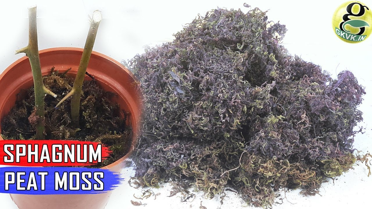 Sphagnum Peat Moss In Gardening Benefits How To Use And How Much