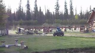 Sled Dogs Training With An Atv, Trail Breaker Kennels, Fairbanks, Ak
