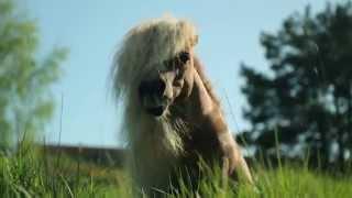 ATG - Vinnie. Ett drömjobb i hästväg/a horsey dreamjob
