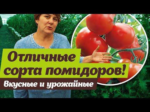 Урожайные и вкусные сорта помидоров