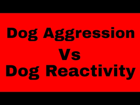 The difference between dog aggression and dog reactivity and how to deal with both