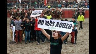 Hacen llamado a denunciar maltrato a animales en rodeos - CHV NOTICIAS