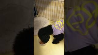 ロイヤルカナン 犬と猫の健康 アンバサダー・プログラムにモニター参加...