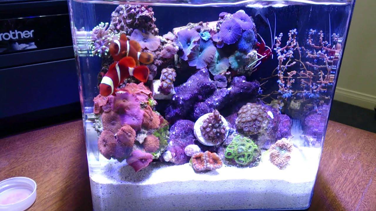 Aqueon Evovle 2 2 Gallon Reef Pico Nano Tank Day 8 Youtube