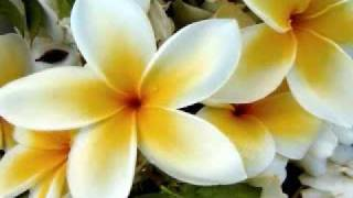 yapese song: jamilya