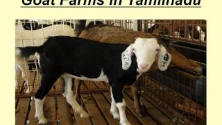 Goat Farms in Tamilnadu