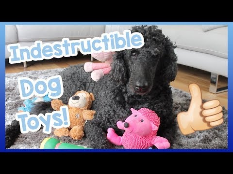 indestructible-dog-toys!-our-top-5-indestructible-dog-toys-for-dogs-that-are-heavy-chewers!
