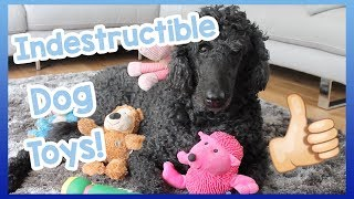 INDESTRUCTIBLE DOG TOYS! Our Top 5 Indestructible Dog Toys for Dogs that are Heavy Chewers! thumbnail