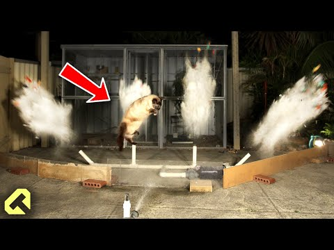 Next Level Cat Repellent - Funny Cat Reactions!