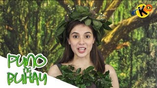Puno ng Buhay | Living Things – Plants | Grade 3  Science