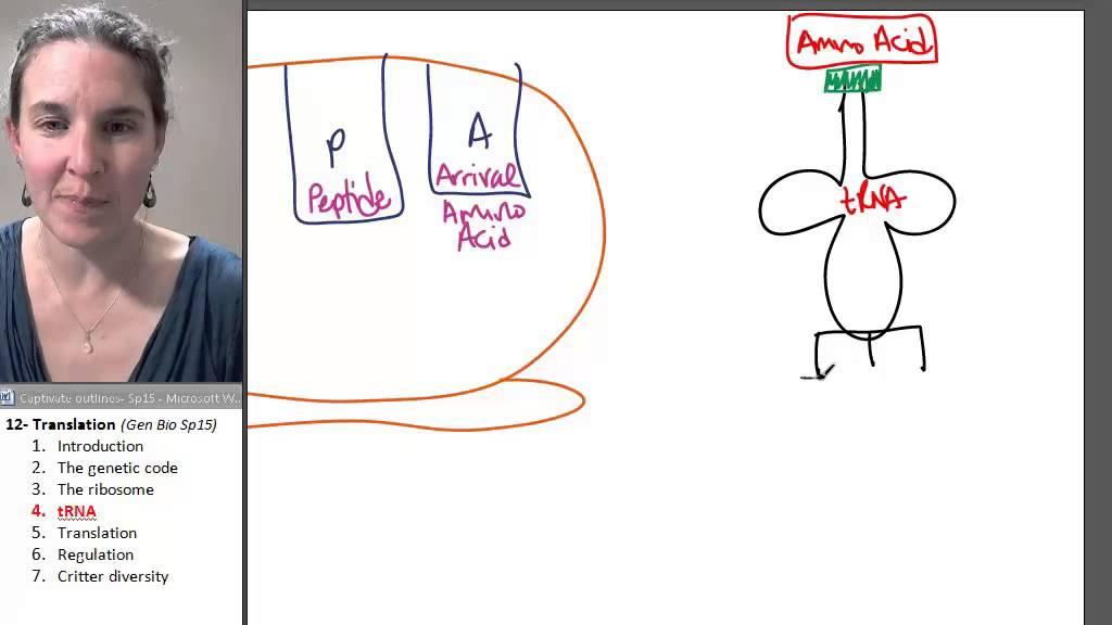 Translation 4- tRNA