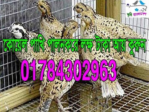 কোয়েল পালন করে লক্ষ টাকা আয় 01784302963,Krishi Bangladesh