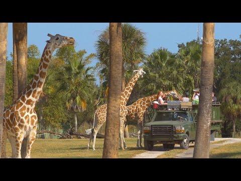 Florida Travel: Meet Amazing Animals on the Serengeti Safari at Busch Gardens