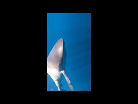 Swimming with real sharks! Fort Lauderdale, FL, United States