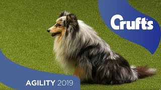 Agility - Kennel Club Novice Cup Final - Large - Jumping | Crufts 2019